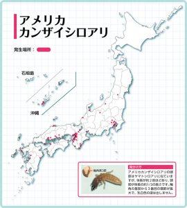 shiroari_bunpu_01
