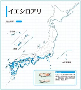 shiroari_bunpu_02