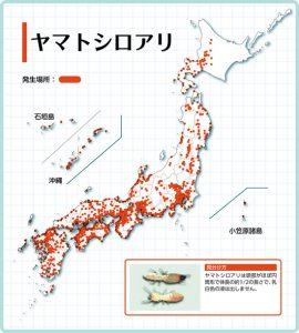 shiroari_bunpu_03